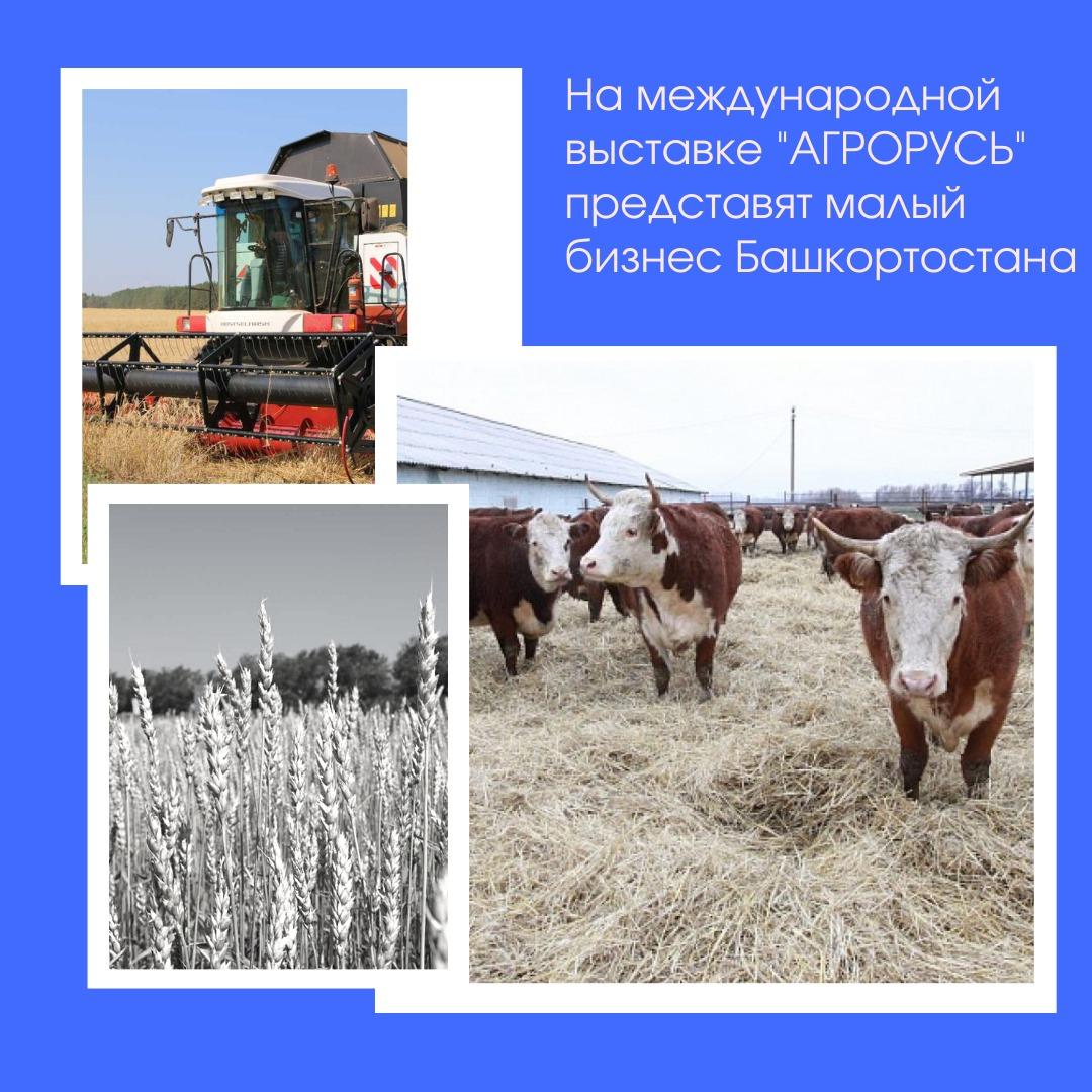 Башкортостан представит молодых фермеров